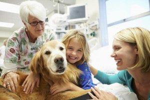 importancia de la terapia asistida con animales